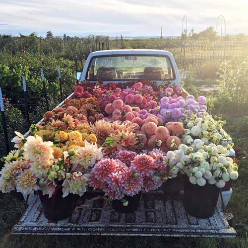 extratos botanicos de flores pra cabelos