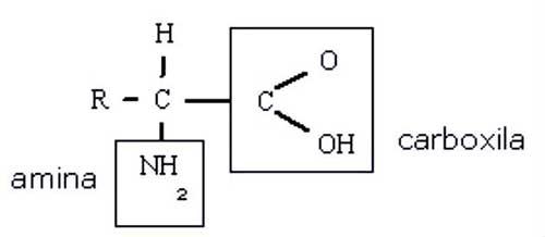 molecula de aminoacido